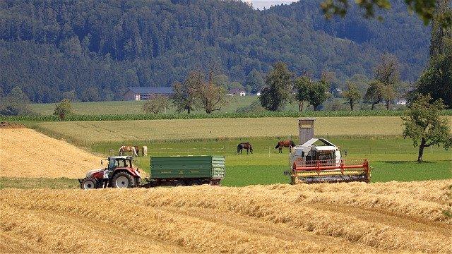 уборка пшеницы фото
